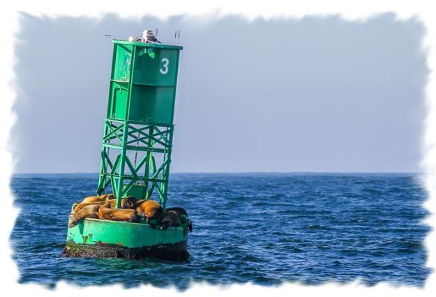 Buoy with seagulls and seals