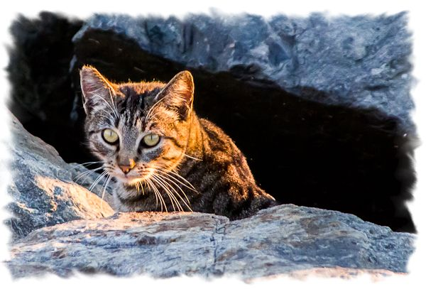 Feral cat in San Diego, California