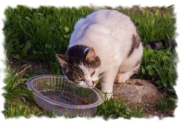 Feral cat in San Diego, California