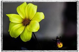 Unknown flower in La Mesa, California, on January 23, 2012