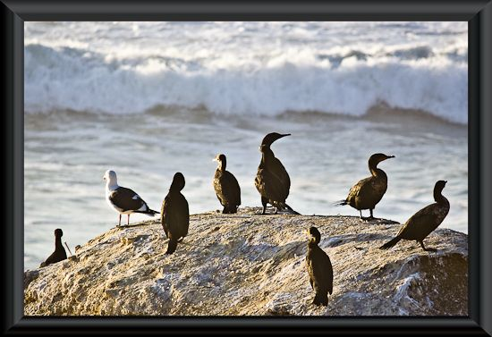 Birds watching the waves crashing ashore