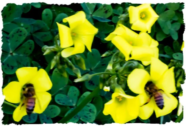 Synchronized bees