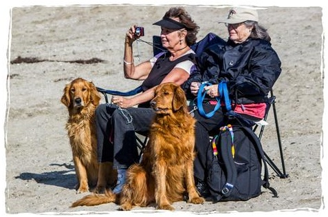 Two women and two dogs at the beach