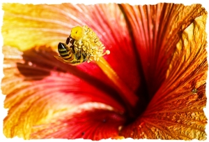 Giant hibiscus and guest