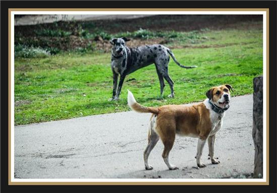 Fine, furry, four-legged friends (dogs!)