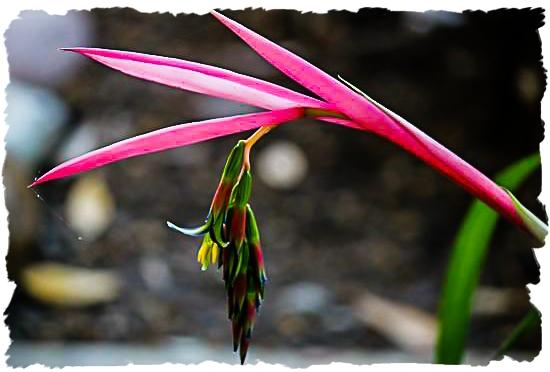 Unknown bromeliad
