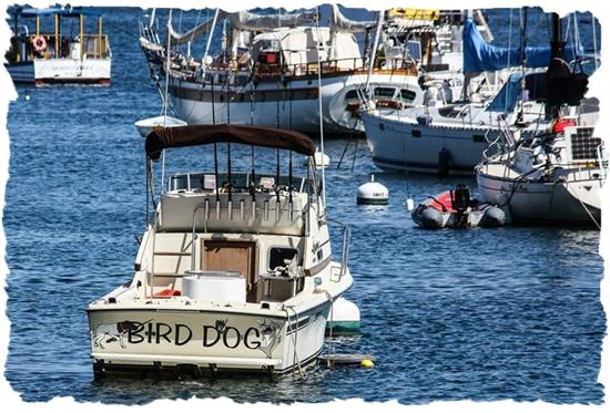 The Bird Dog