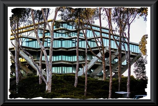 Geisel Library through the eucalyptus grove at the University of California San Diego