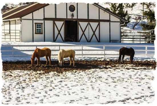 Horses in the snow in San Diego County, California