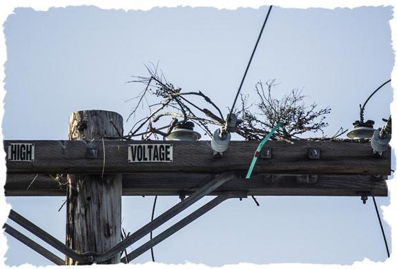 Beginnings of an osprey nest