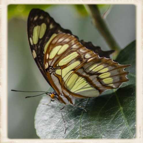 Butterfly Jungle at the San Diego Zoo's Safari Park