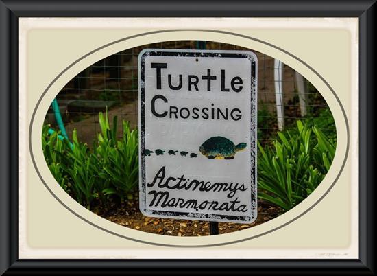 Turtle Crossing