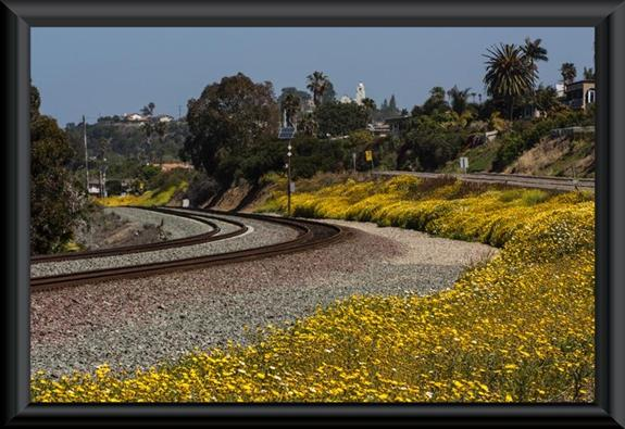 Yellow wildflowers in San Diego