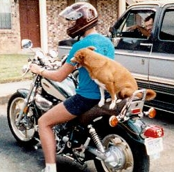 Russel Ray & Sugar, his motorcycle riding dog