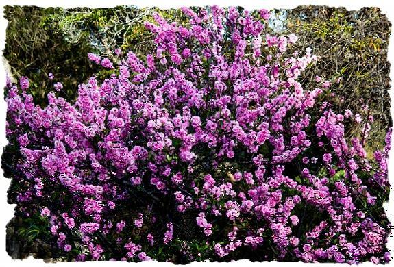 Flowers in Balboa Park in San Diego, California