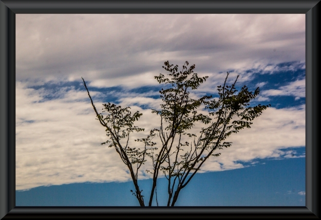 Lonely tree in the clouds