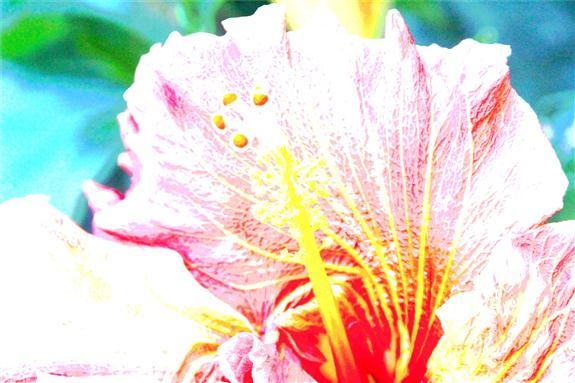 Reprocessed hibiscus picture