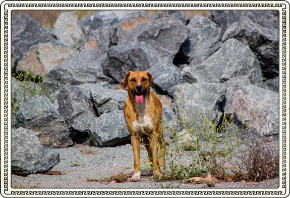 Wild dog in the boondocks