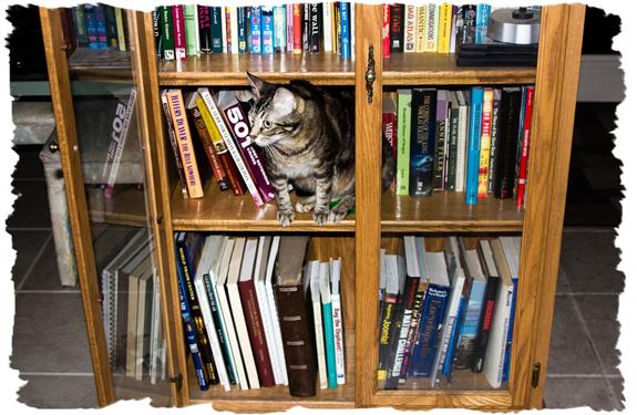 Zoey the Cool Cat exploring the books