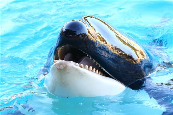 Dining with Shamu at SeaWorld