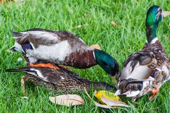 Bullying in the bird world