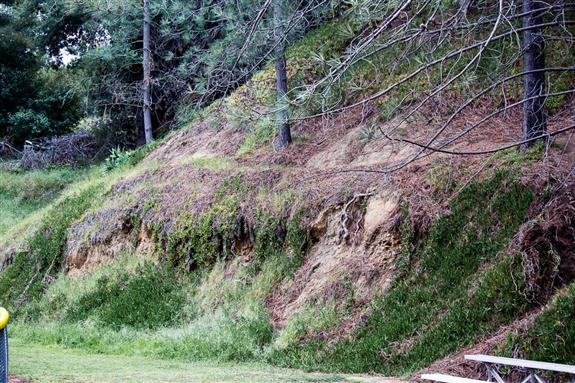 Half-million year old Pleistocene conglomerate in Rose Canyon
