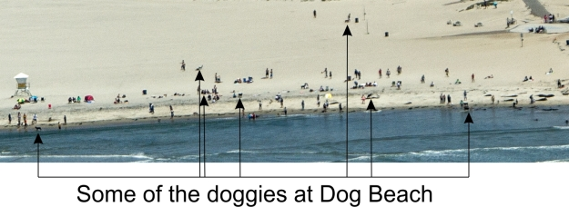 Dogs on dog beach from the sky