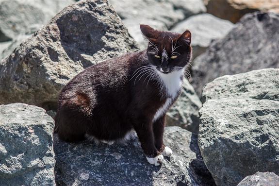 Tijuana River Estuary kitty cat