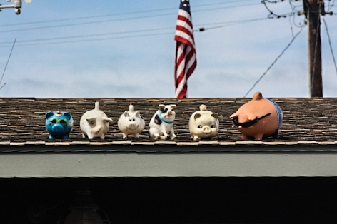 Roof pigs