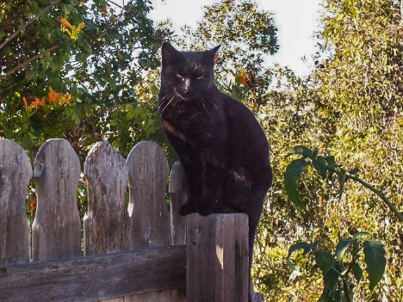 Sophie on fence