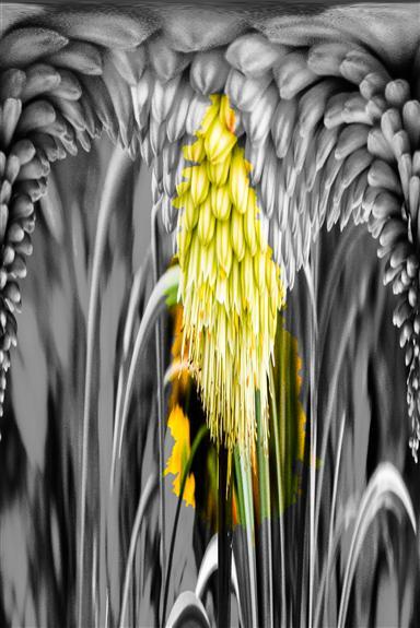 Aloe 4 Dripper