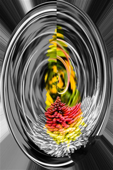 Aloe 4 Rounder