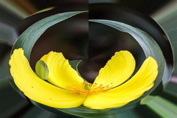 Flower 1 Rounder