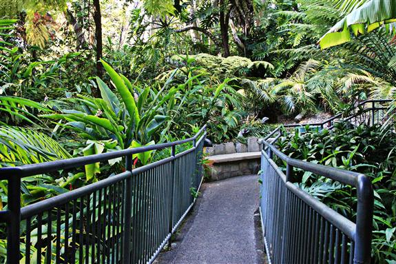 Fern Canyon at the San Diego Zoo