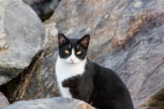 Feral cat on the San Diego jetty