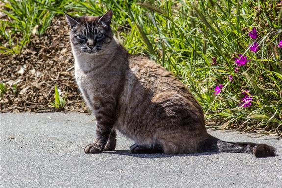 Fine, furry, four-legged friend