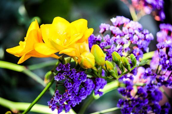 friday flower fiesta  july ,   russel ray photos, Beautiful flower