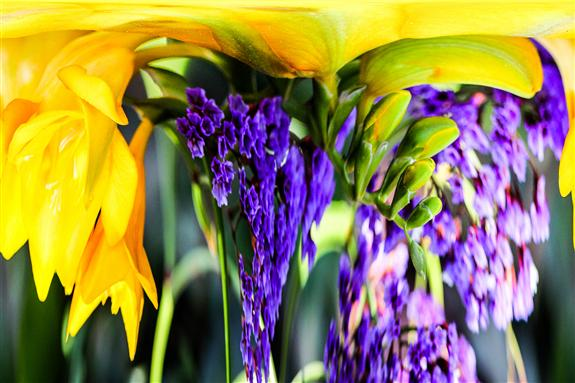 Yellow and Purple Flowers Dripper