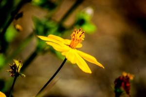 Yellow Flower 4