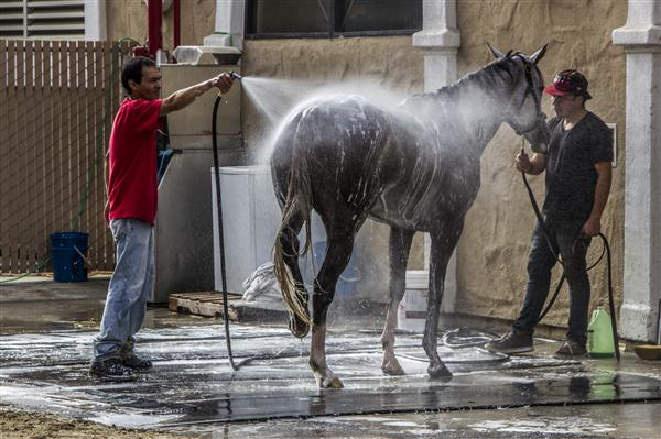 Elegant Horse Shower At The Del Mar Races, San Diego California