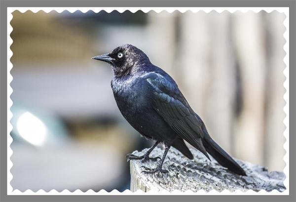 Bird picture framed in Photoshop CS6