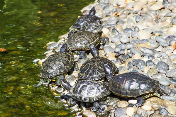 Turtles at the San Diego Zoo