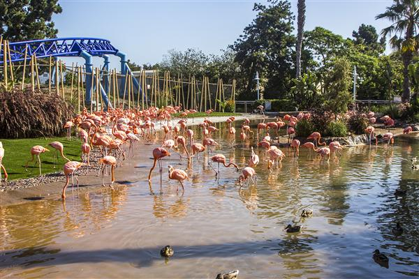 Flamingo lagoon at SeaWorld San Diego