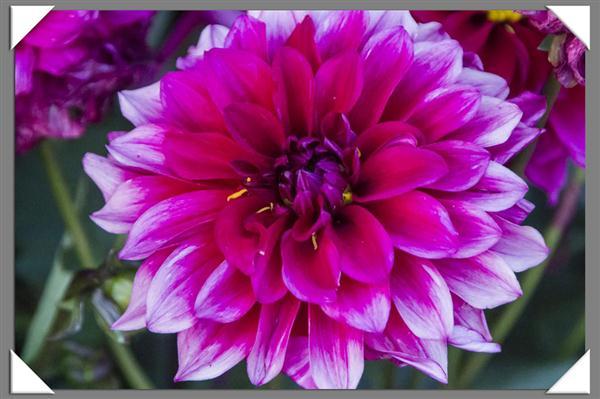Friday Flower Fiesta