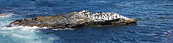 Seals and cormorants in La Jolla California