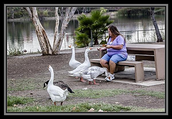 The Goose Lady, Lake Murray, San Diego, California