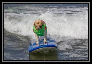 Seventh Annual Del Mar Surf Dog Surf-a-thon