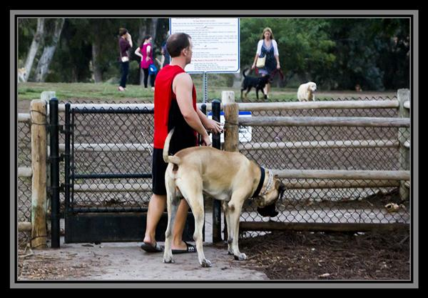 Off leash dog park, Balboa Park, San Diego