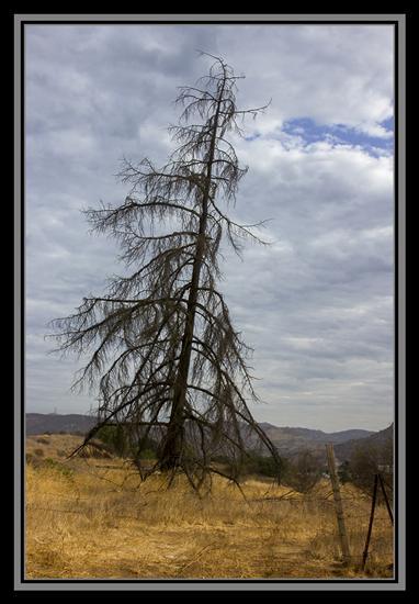 Dead tree in the boondocks