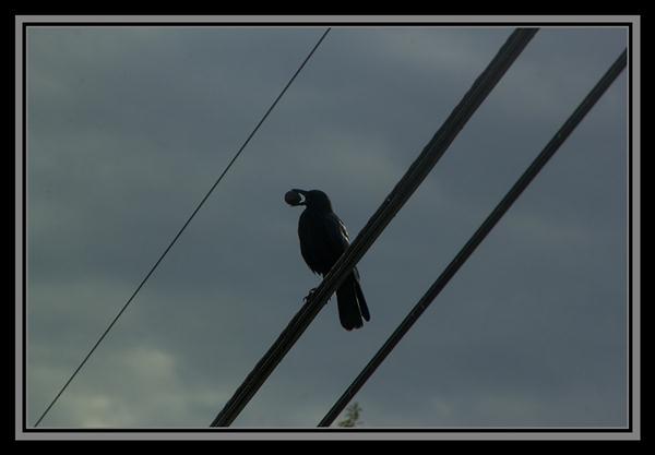 Bird in the boondocks